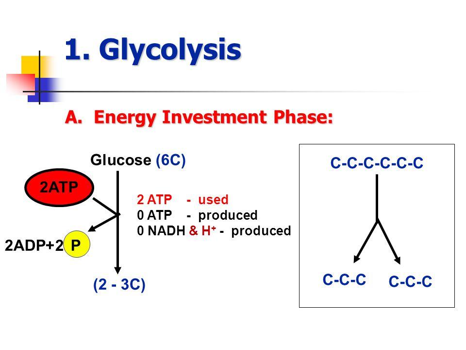 1. Glycolysis A.