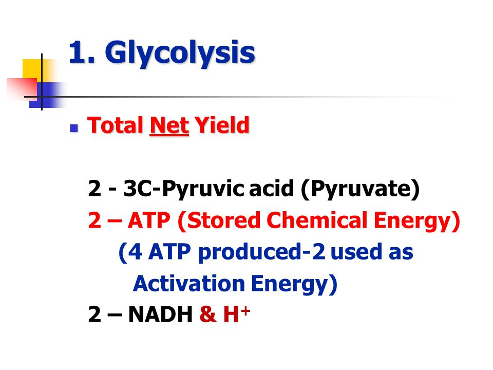 1. Glycolysis Total Net Yield Total Net Yield 2 - 3C-Pyruvic acid (Pyruvate) 2 – ATP (Stored Chemical Energy) (4 ATP produced-2 used as Activation Ene
