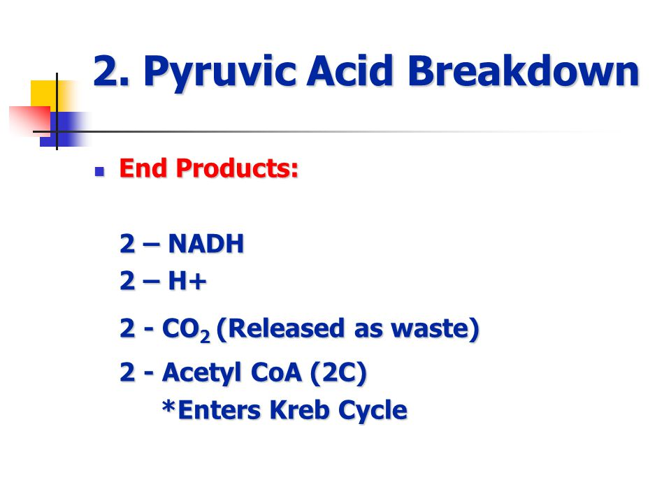 2. Pyruvic Acid Breakdown End Products: End Products: 2 – NADH 2 – H+ 2 - CO 2 (Released as waste) 2 - Acetyl CoA (2C) *Enters Kreb Cycle