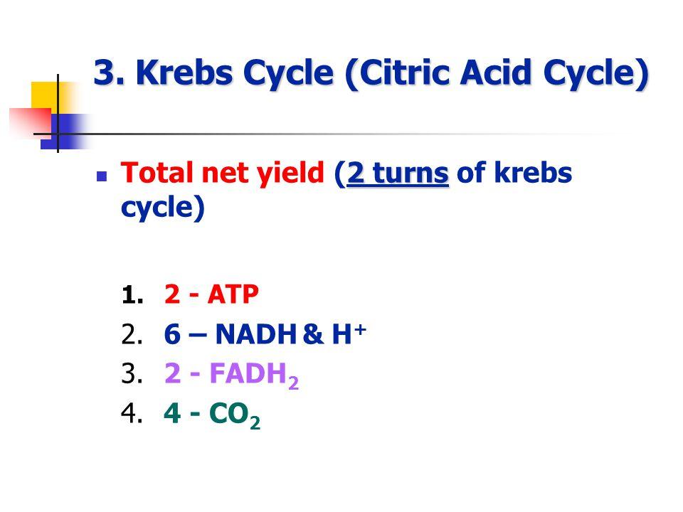 3.Krebs Cycle (Citric Acid Cycle) 2 turns Total net yield (2 turns of krebs cycle) 1.