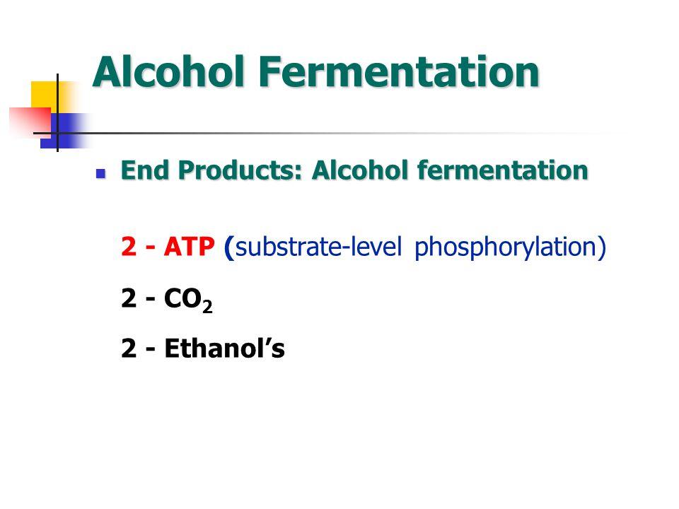 Alcohol Fermentation End Products: Alcohol fermentation End Products: Alcohol fermentation 2 - ATP (substrate-level phosphorylation) 2 - CO 2 2 - Ethanol's