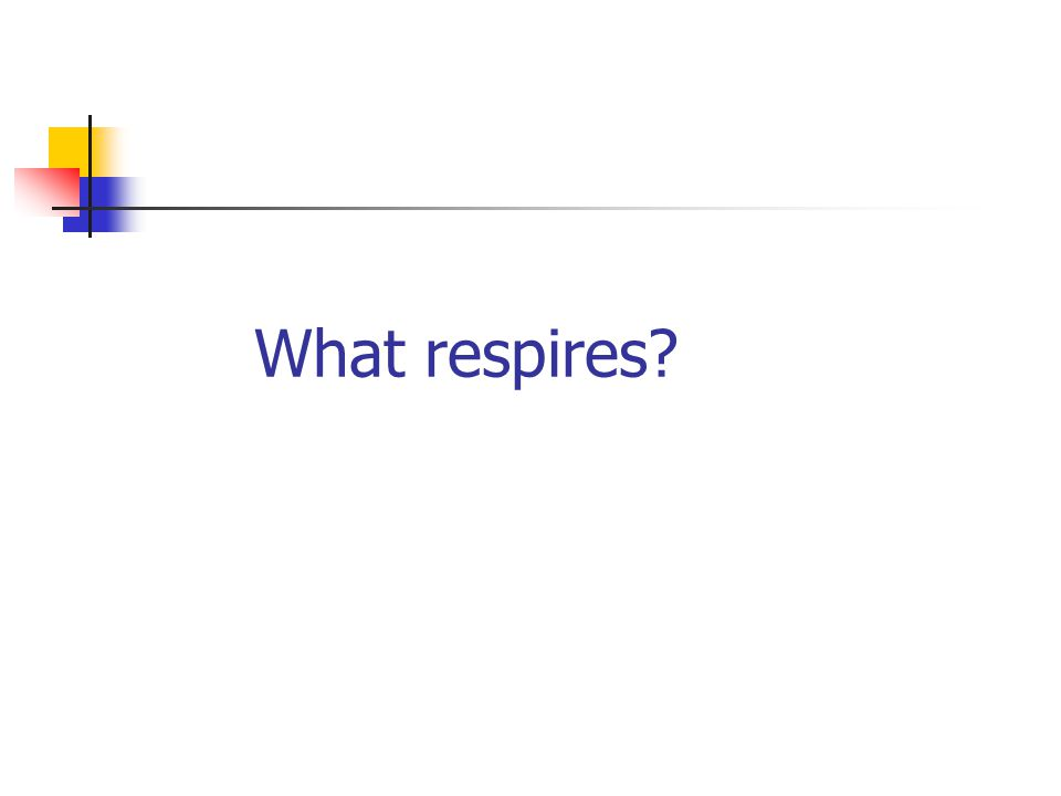 What respires
