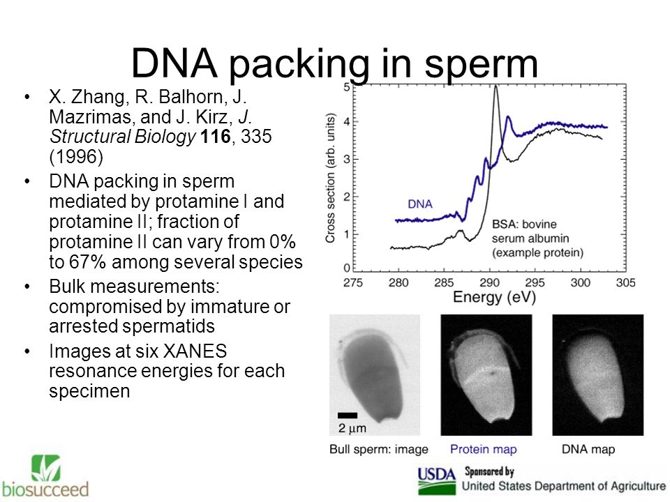 DNA packing in sperm X. Zhang, R. Balhorn, J. Mazrimas, and J.