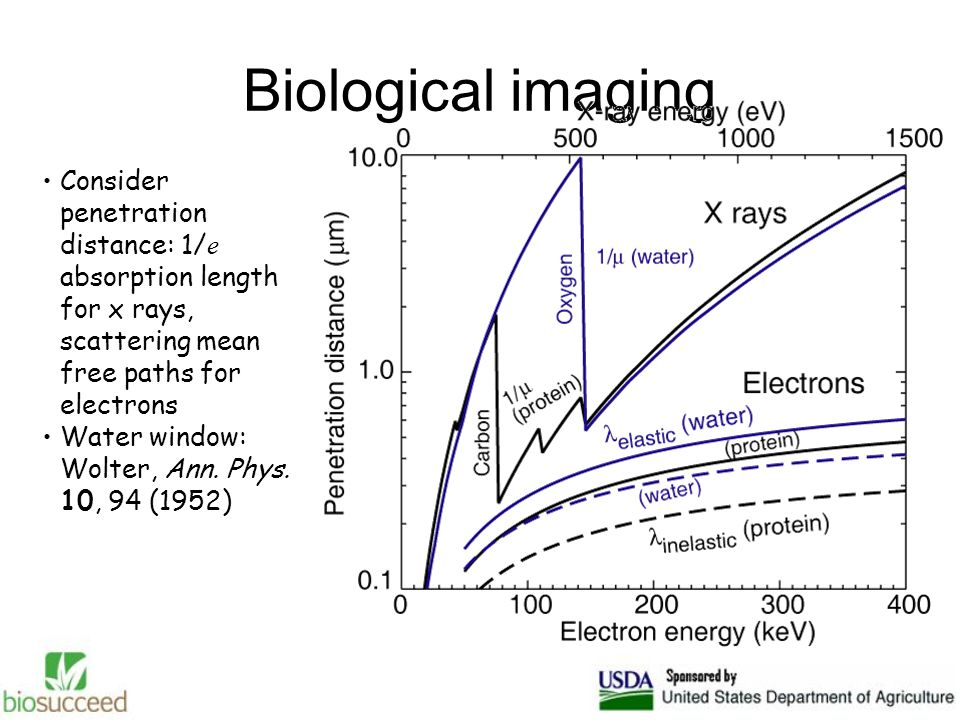 Biological imaging Consider penetration distance: 1/ e absorption length for x rays, scattering mean free paths for electrons Water window: Wolter, Ann.