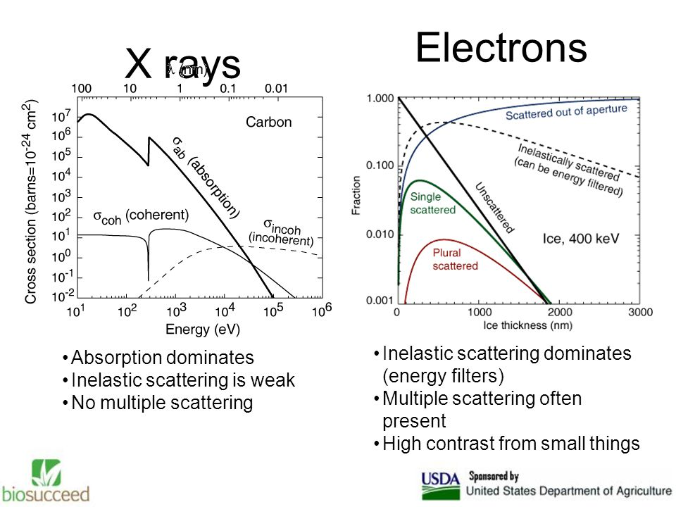 X rays Electrons Absorption dominates Inelastic scattering is weak No multiple scattering Inelastic scattering dominates (energy filters) Multiple scattering often present High contrast from small things