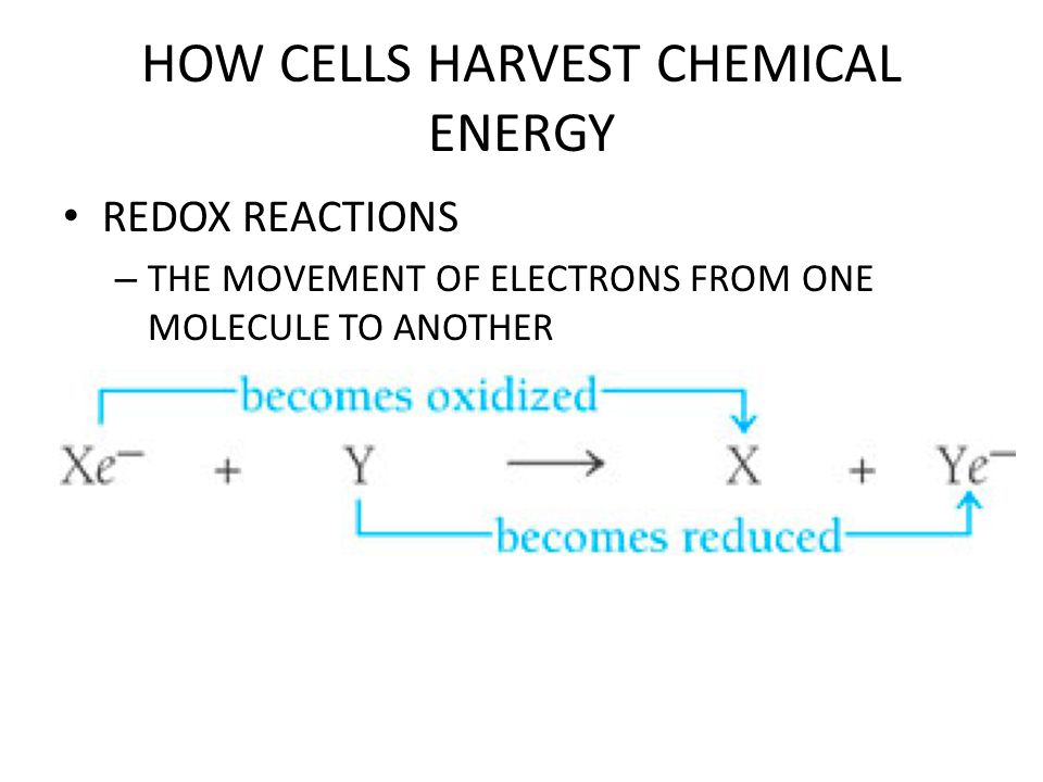 HOW CELLS HARVEST CHEMICAL ENERGY WHERE DOES ALL THE ENERGY IN GLUCOSE COME FROM TO BEGIN WITH?.