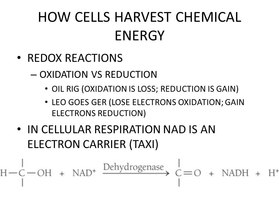 HOW CELLS HARVEST CHEMICAL ENERGY REDOX REACTIONS RELEASE ENERGY WHEN ELECTRONS FALL FROM ELECTRON CARRIER TO OXYGEN – ELECTRON CARRIERS?.