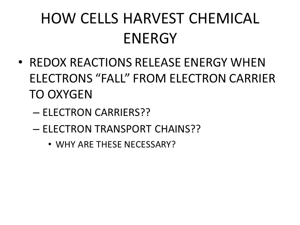 HOW CELLS HARVEST CHEMICAL ENERGY WHAT HAPPENS NEXT?.