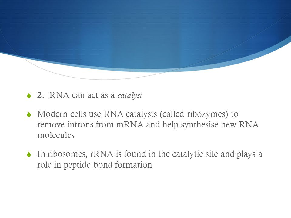  2. RNA can act as a catalyst  Modern cells use RNA catalysts (called ribozymes) to remove introns from mRNA and help synthesise new RNA molecules 