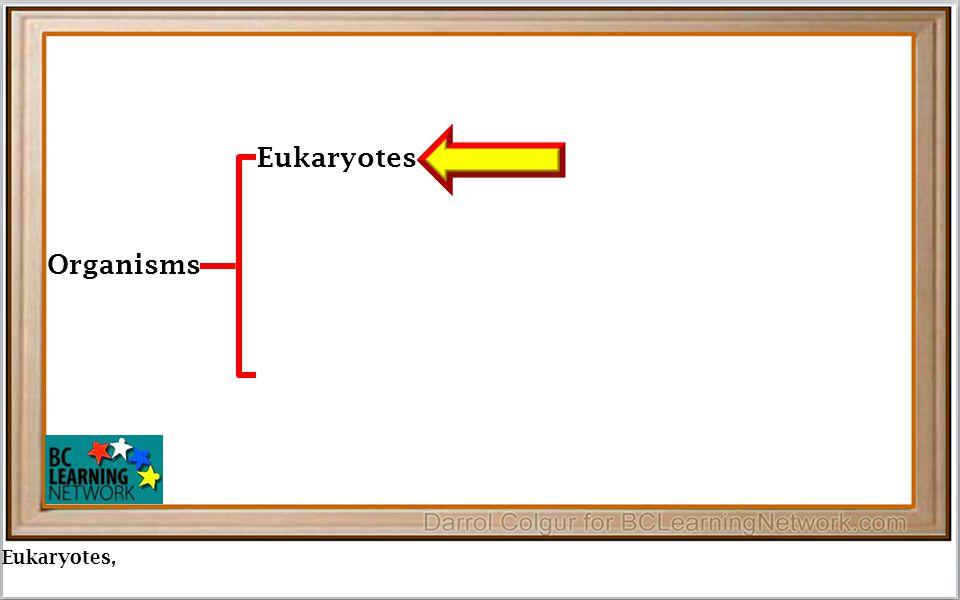 Eukaryotes, Organisms Eukaryotes