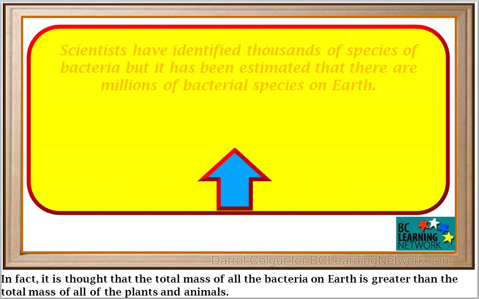 In fact, it is thought that the total mass of all the bacteria on Earth is greater than the total mass of all of the plants and animals.