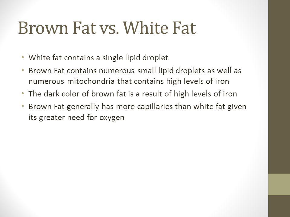 Brown Fat vs.