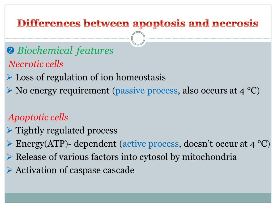  Biochemical features Necrotic cells  Loss of regulation of ion homeostasis  No energy requirement ( passive process, also occurs at 4 °C ) Apoptotic cells  Tightly regulated process  Energy ( ATP ) - dependent ( active process, doesn't occur at 4 °C )  Release of various factors into cytosol by mitochondria  Activation of caspase cascade