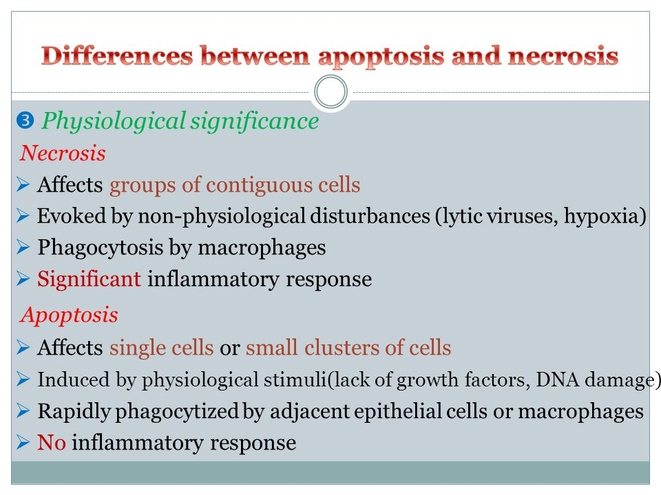  Physiological significance Necrosis  Affects groups of contiguous cells  Evoked by non-physiological disturbances (lytic viruses, hypoxia)  Phagocytosis by macrophages  Significant inflammatory response Apoptosis  Affects single cells or small clusters of cells  Induced by physiological stimuli(lack of growth factors, DNA damage)  Rapidly phagocytized by adjacent epithelial cells or macrophages  No inflammatory response