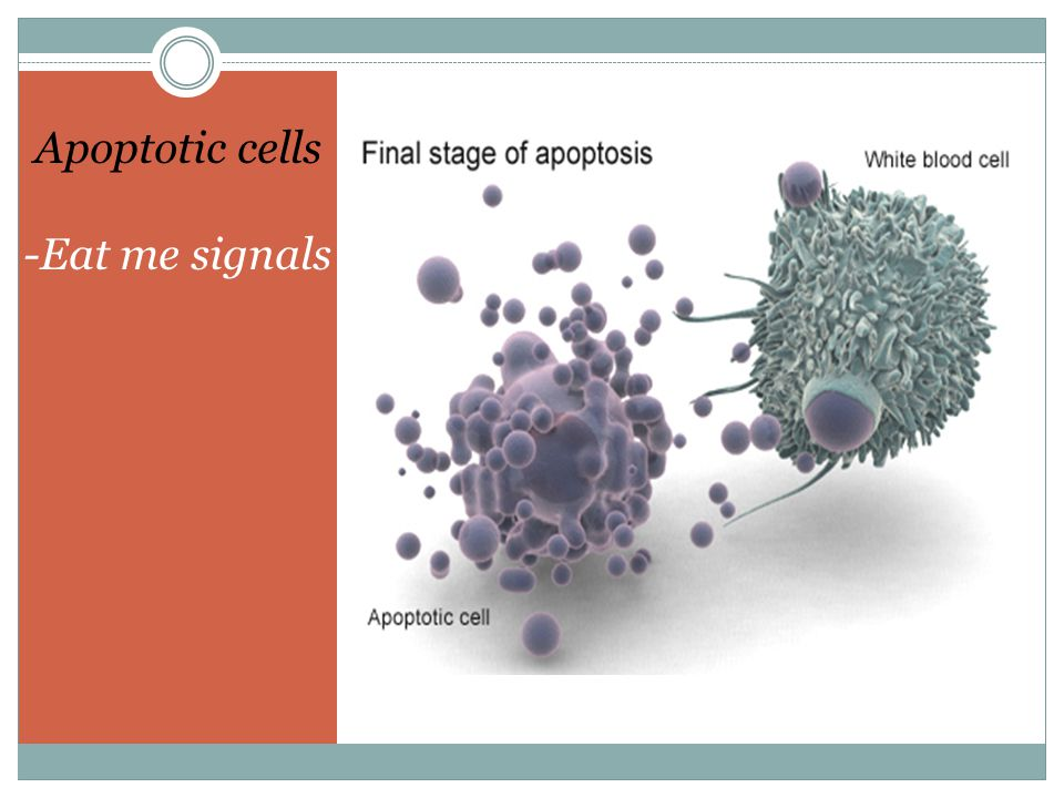 Apoptotic cells -Eat me signals