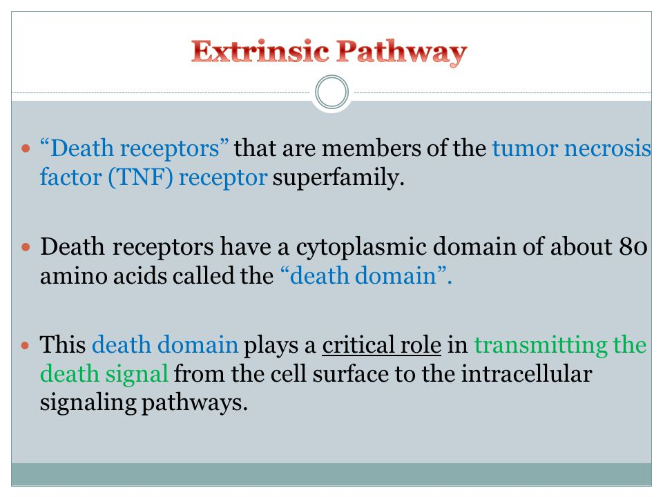 Death receptors that are members of the tumor necrosis factor (TNF) receptor superfamily.