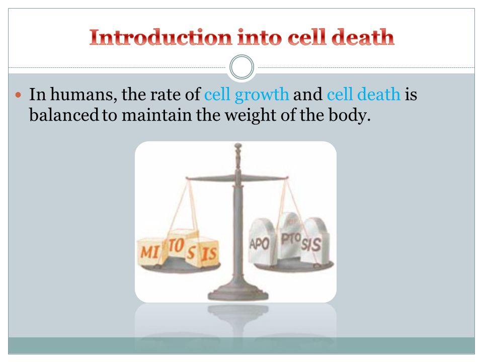 In humans, the rate of cell growth and cell death is balanced to maintain the weight of the body.