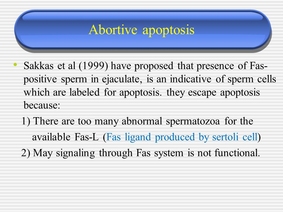 Abortive apoptosis Sakkas et al (1999) have proposed that presence of Fas- positive sperm in ejaculate, is an indicative of sperm cells which are labe
