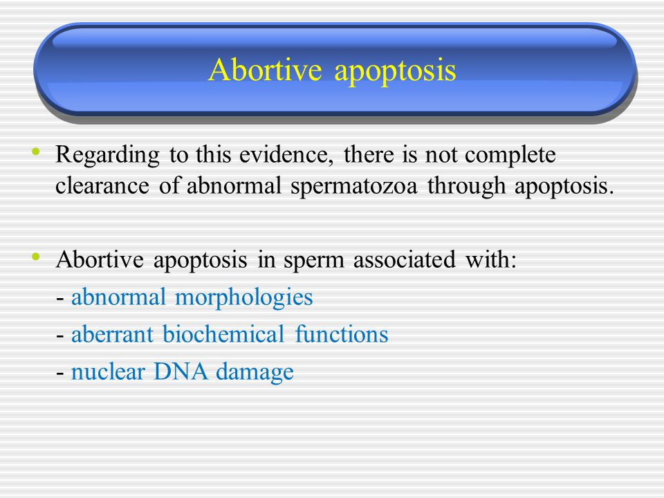 Abortive apoptosis Regarding to this evidence, there is not complete clearance of abnormal spermatozoa through apoptosis. Abortive apoptosis in sperm