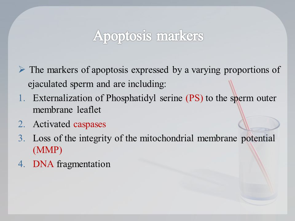  The markers of apoptosis expressed by a varying proportions of ejaculated sperm and are including: 1.Externalization of Phosphatidyl serine (PS) to the sperm outer membrane leaflet 2.Activated caspases 3.Loss of the integrity of the mitochondrial membrane potential (MMP) 4.DNA fragmentation