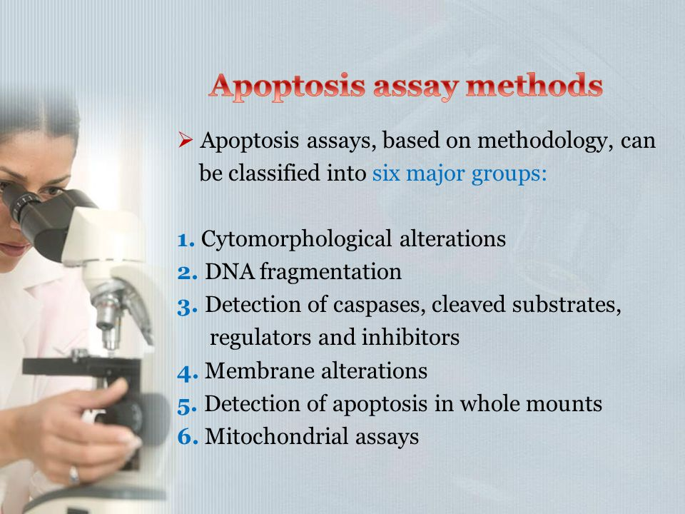  Apoptosis assays, based on methodology, can be classified into six major groups: 1. Cytomorphological alterations 2. DNA fragmentation 3. Detection