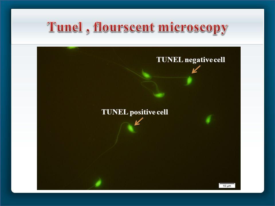 TUNEL negative cell