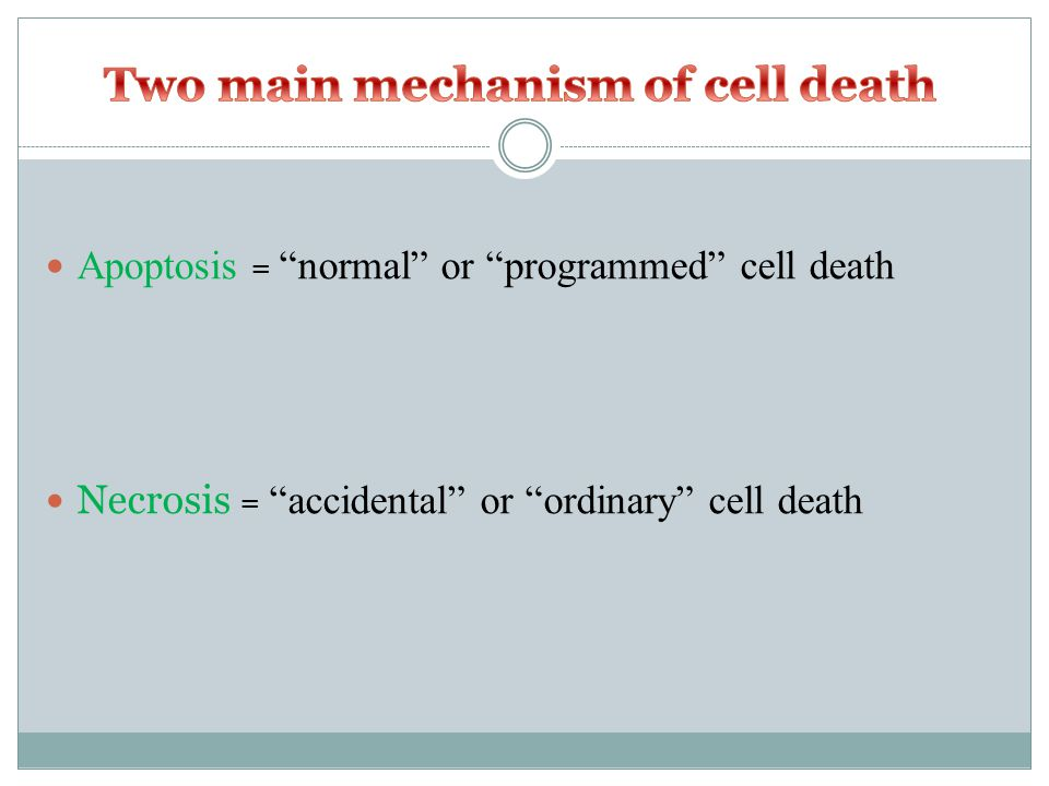 Apoptosis = normal or programmed cell death Necrosis = accidental or ordinary cell death