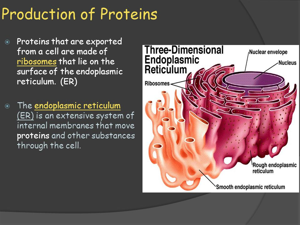 Production of Proteins  The part of the ER with attached ribosomes is called rough ER because it has a rough appearance when viewed in the electron microscope.