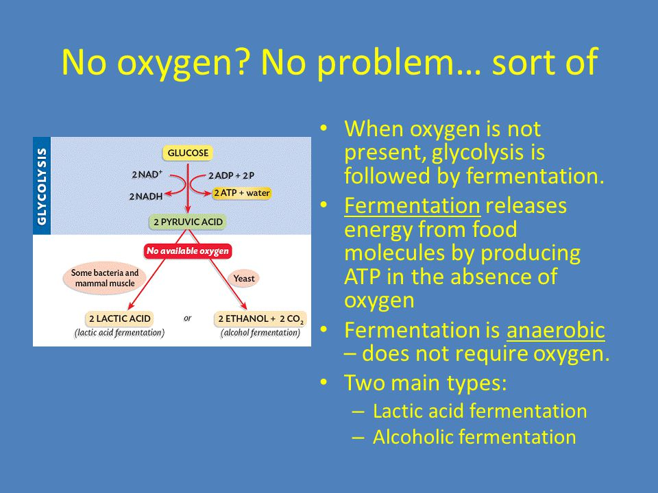 No oxygen? No problem… sort of When oxygen is not present, glycolysis is followed by fermentation. Fermentation releases energy from food molecules by