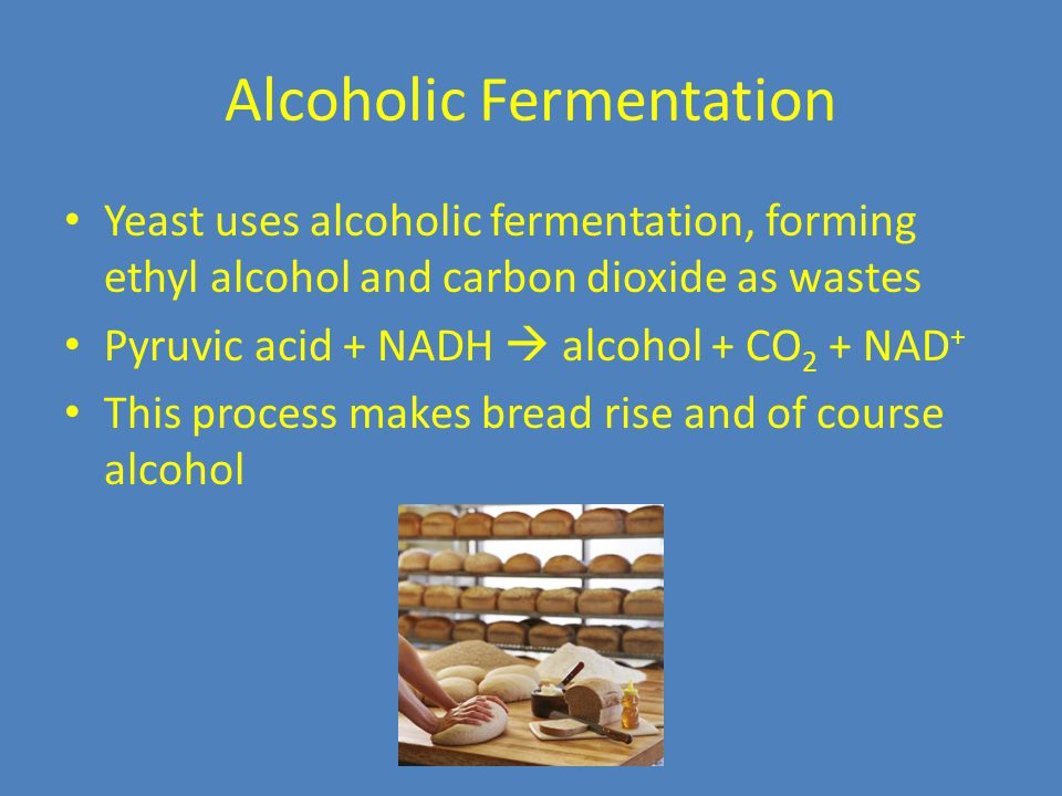 Alcoholic Fermentation Yeast uses alcoholic fermentation, forming ethyl alcohol and carbon dioxide as wastes Pyruvic acid + NADH  alcohol + CO 2 + NAD + This process makes bread rise and of course alcohol