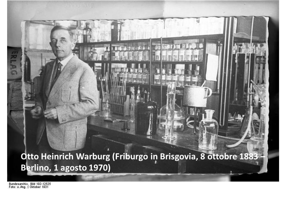 Otto Heinrich Warburg (Friburgo in Brisgovia, 8 ottobre 1883 – Berlino, 1 agosto 1970)