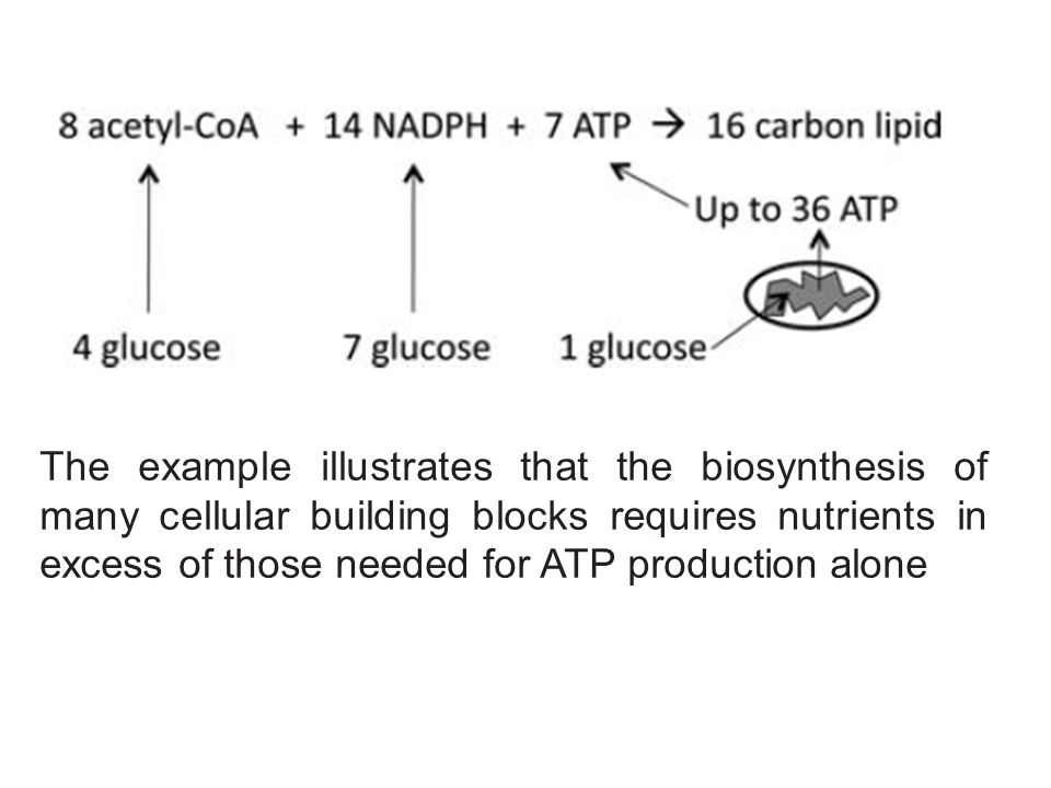 The example illustrates that the biosynthesis of many cellular building blocks requires nutrients in excess of those needed for ATP production alone