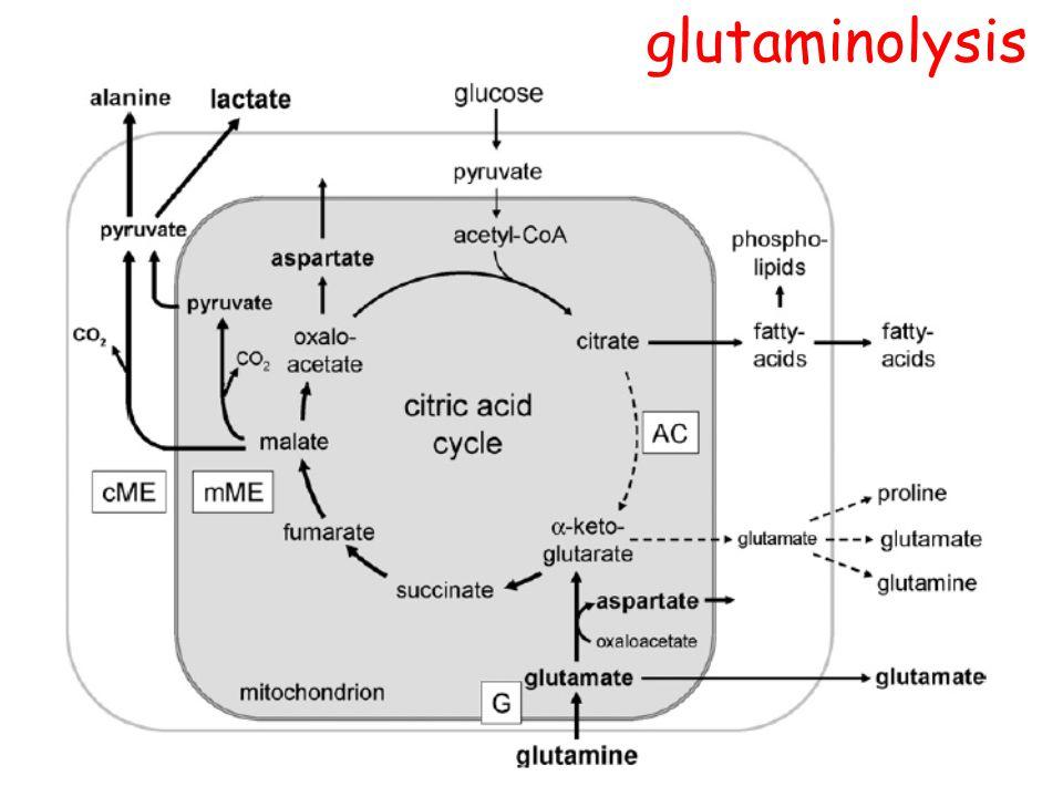 glutaminolysis
