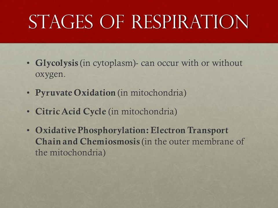 Stages of Respiration Glycolysis (in cytoplasm)- can occur with or without oxygen.