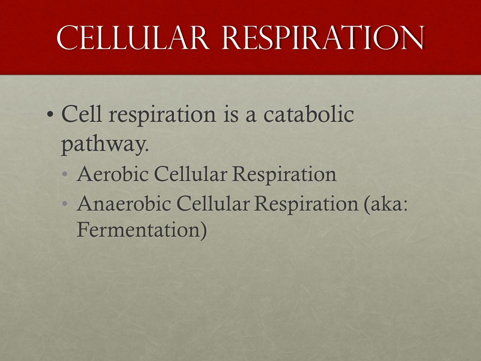 Cell respiration is a catabolic pathway.Cell respiration is a catabolic pathway.