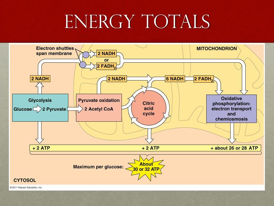 Energy Totals Kh;Kh;