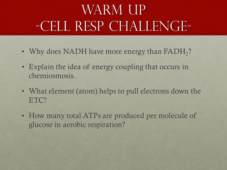 Warm Up -Cell Resp Challenge- Why does NADH have more energy than FADH 2 Why does NADH have more energy than FADH 2 .