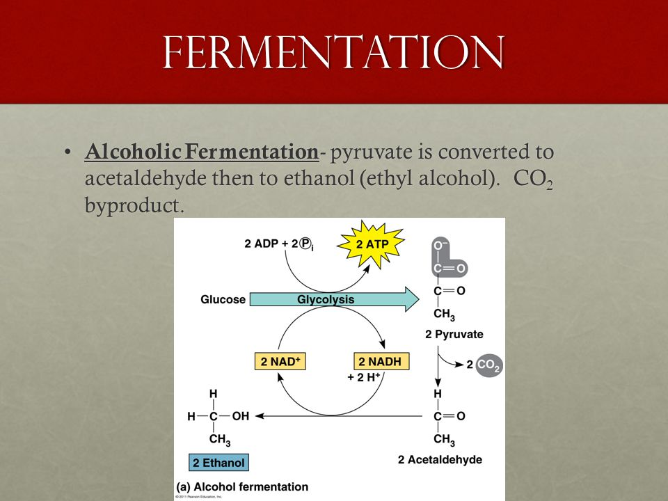 Fermentation Alcoholic Fermentation - pyruvate is converted to acetaldehyde then to ethanol (ethyl alcohol).