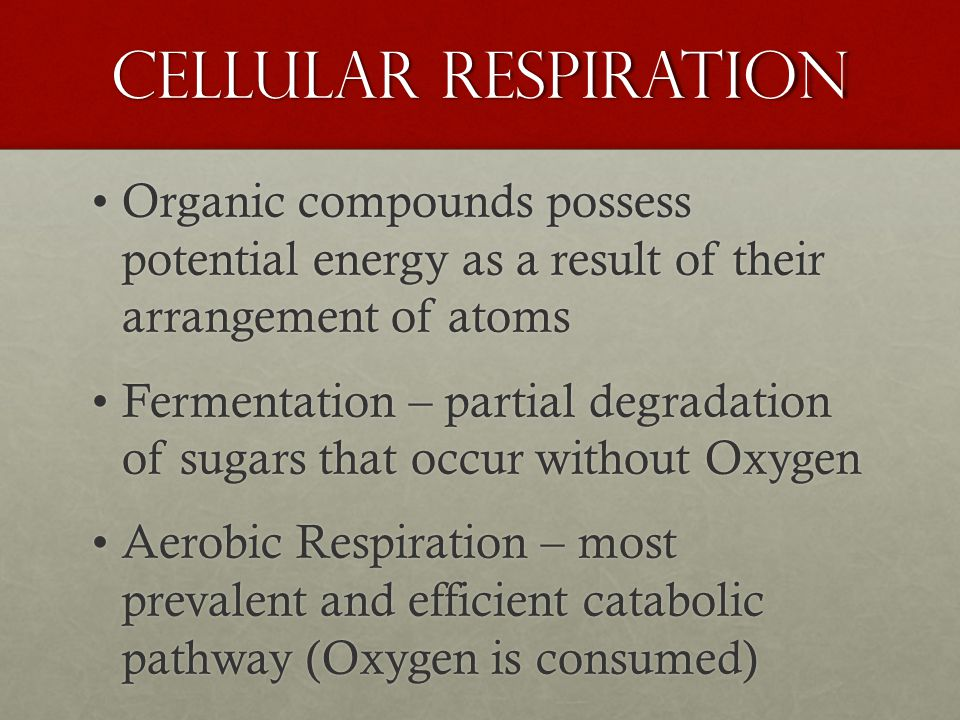Cellular Respiration Organic compounds possess potential energy as a result of their arrangement of atomsOrganic compounds possess potential energy as a result of their arrangement of atoms Fermentation – partial degradation of sugars that occur without OxygenFermentation – partial degradation of sugars that occur without Oxygen Aerobic Respiration – most prevalent and efficient catabolic pathway (Oxygen is consumed)Aerobic Respiration – most prevalent and efficient catabolic pathway (Oxygen is consumed)