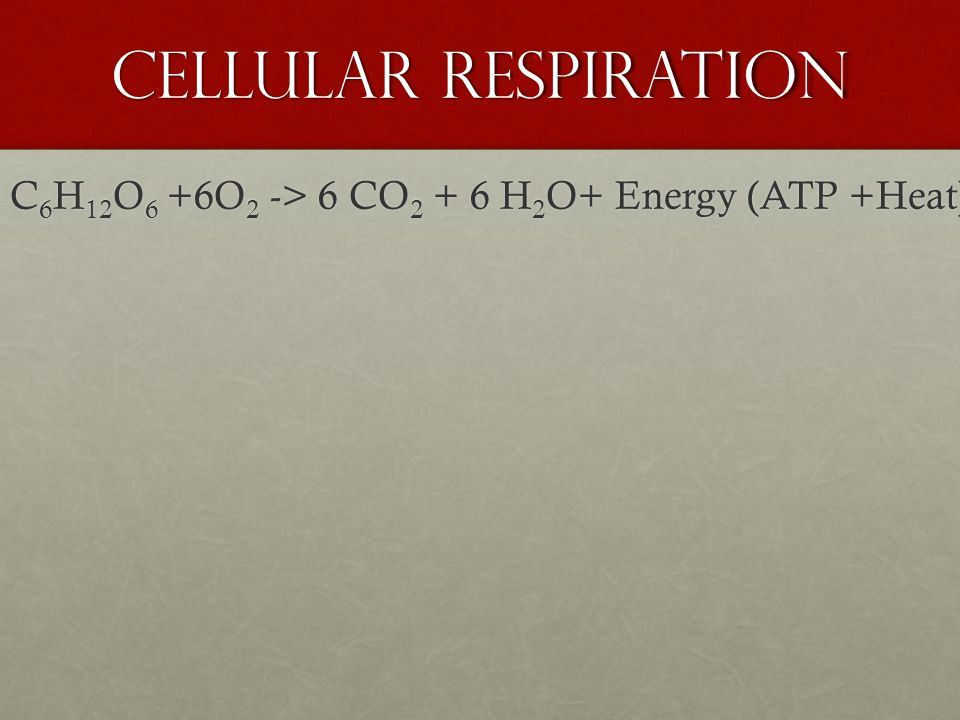 Cellular Respiration Catabolic processes do not directly do the work; instead, catabolism is linked to work by chemical drive shaft – ATPCatabolic processes do not directly do the work; instead, catabolism is linked to work by chemical drive shaft – ATP Require the regeneration of ATP… This is where Cellular Respiration comes into playRequire the regeneration of ATP… This is where Cellular Respiration comes into play