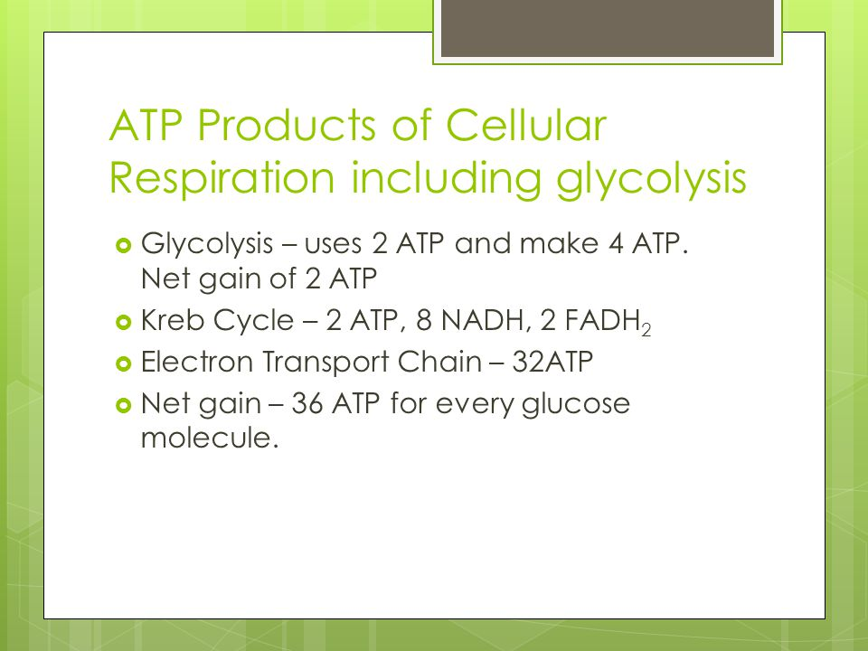 ATP Products of Cellular Respiration including glycolysis  Glycolysis – uses 2 ATP and make 4 ATP. Net gain of 2 ATP  Kreb Cycle – 2 ATP, 8 NADH, 2