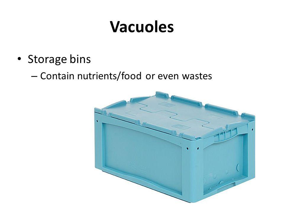 Vacuoles Storage bins – Contain nutrients/food or even wastes