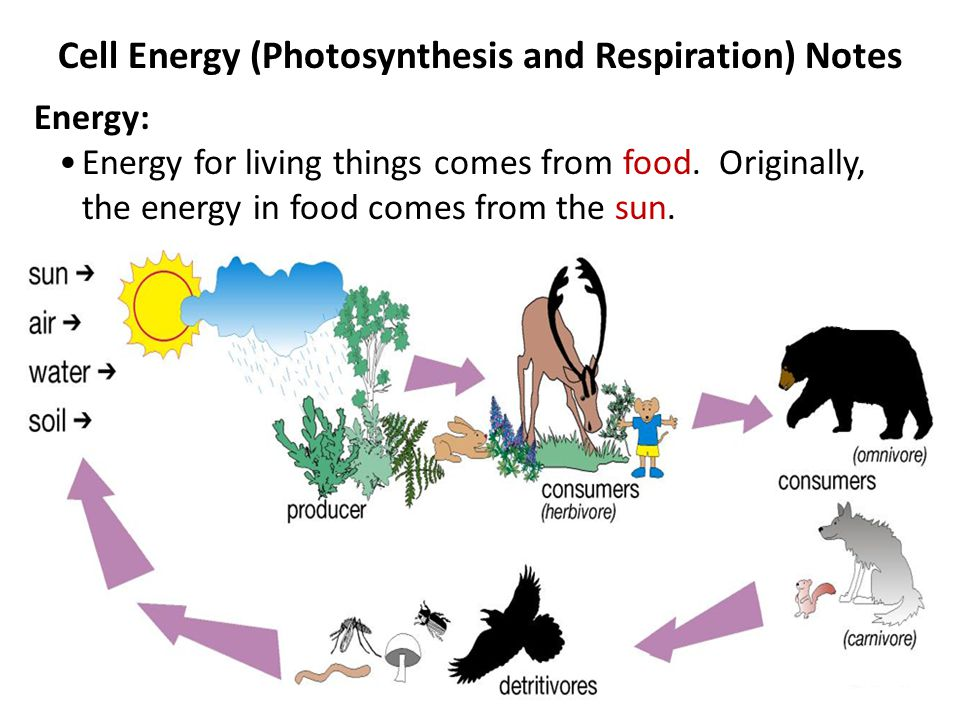 Cell Energy (Photosynthesis and Respiration) Notes Energy: Energy for living things comes from food.