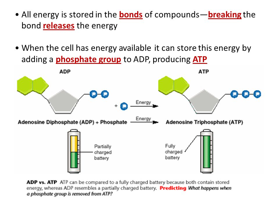All energy is stored in the bonds of compounds—breaking the bond releases the energy When the cell has energy available it can store this energy by adding a phosphate group to ADP, producing ATP