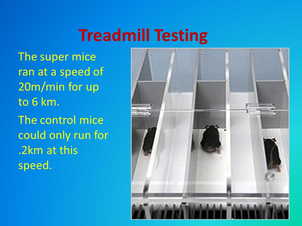 Treadmill Testing The super mice ran at a speed of 20m/min for up to 6 km.