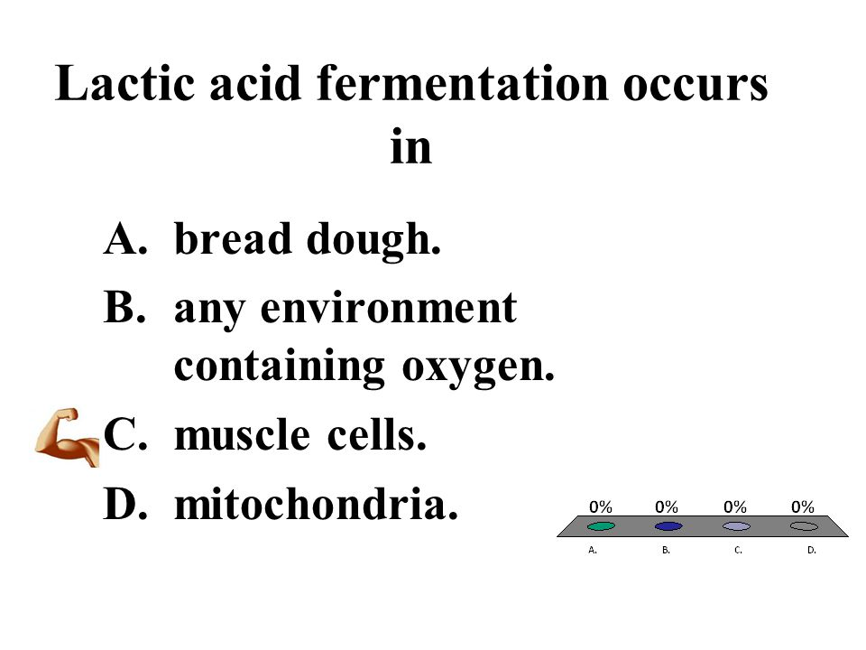Lactic acid fermentation occurs in A.bread dough. B.any environment containing oxygen. C.muscle cells. D.mitochondria.