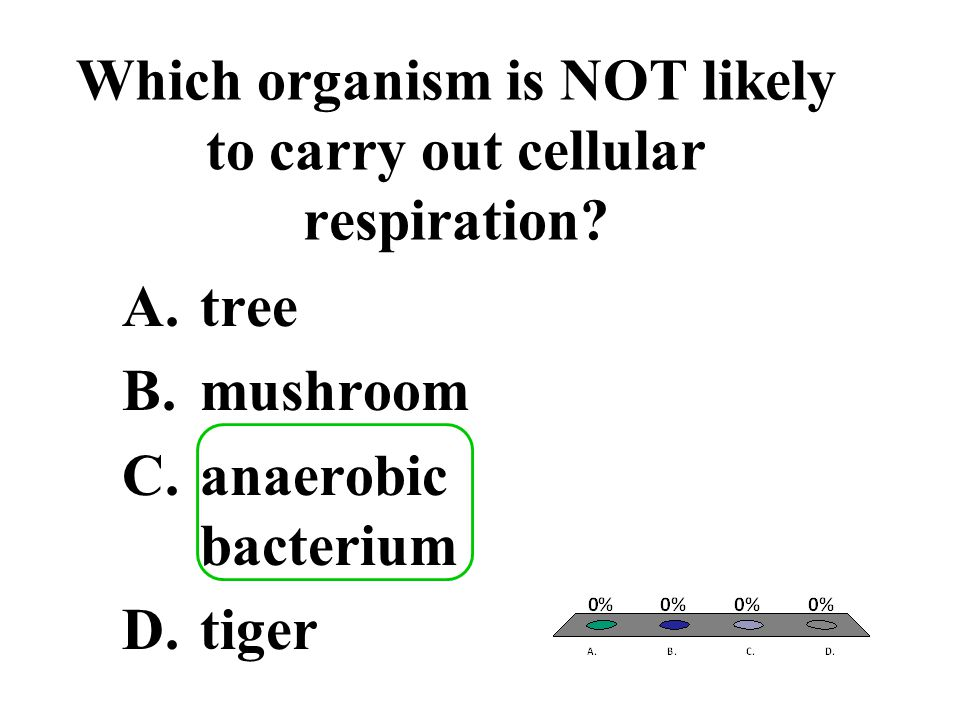 Which organism is NOT likely to carry out cellular respiration? A.tree B.mushroom C.anaerobic bacterium D.tiger
