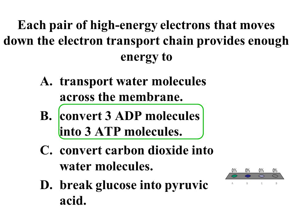 Each pair of high-energy electrons that moves down the electron transport chain provides enough energy to A.transport water molecules across the membr