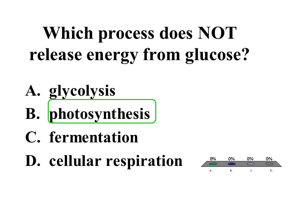 Which process does NOT release energy from glucose? A.glycolysis B.photosynthesis C.fermentation D.cellular respiration