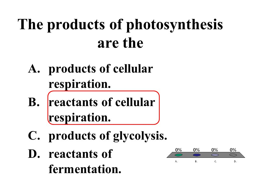 The products of photosynthesis are the A.products of cellular respiration. B.reactants of cellular respiration. C.products of glycolysis. D.reactants